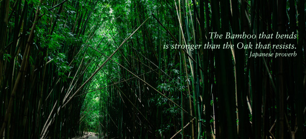 """The Bamboo that bends is stronger than the Oak that resists."" (Japanese proverb) Pīpīwai Trail, Kīpahulu, Maui. © 2015 Sugar + Shake"