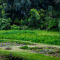 Kapahu Living Farm in Kīpahulu, Maui. © 2015 Sugar + Shake