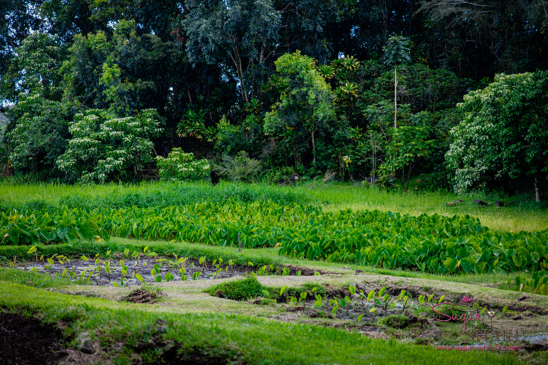 Kapahu Living Farm in Kīpahulu, Maui. © 2015 Sugar + Shake