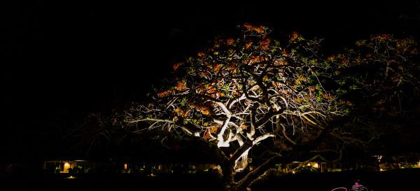Night at Travaasa Hāna. © 2015 Sugar + Shake